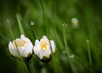 květy a kapky
