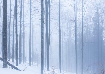 mlhavá procházka lesem