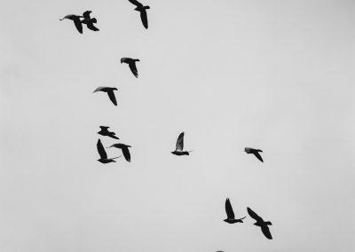 let ptáků