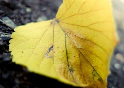 žluté srdce