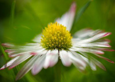 jarní květ - detail