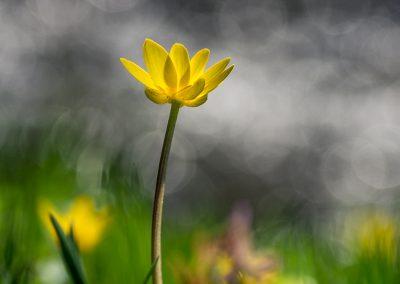 jaro u řeky Oslavy
