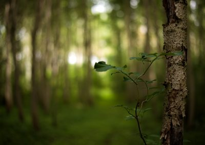 uprostřed lesa