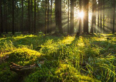 svítání v přírodě