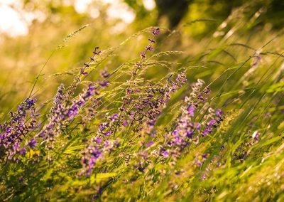 jarní rozkvetlá příroda