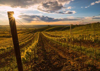 ve vinohradech